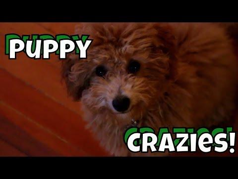 Puppy Crazies - Just Gin: Cutest Dog Ever! VOL. 15