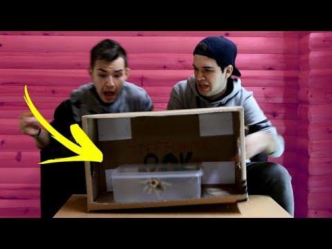 WHAT'S IN THE BOX? (20K SPECIAL) w/ GP, BobiBeatbox, Winncoot, Slick
