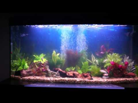 Fluval Vicenza 260 Limited Edition - Planted