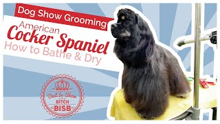 Dog Show Grooming: How to Groom an American Cocker Spaniel  Bath & Blow Dry
