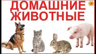 ДОМАШНИЕ ЖИВОТНЫЕ СО ЗВУКАМИ. Развивающее видео для детей про животных с голосами и картинками