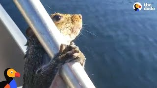 Guy Helps Squirrel Trying To Swim In Lake   The Dodo