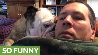 Bulldog reacts to owner who says no