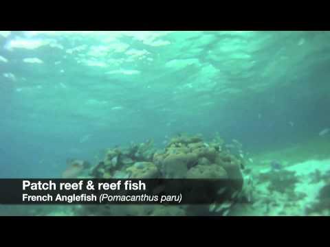 Marine Life of The Bahamas