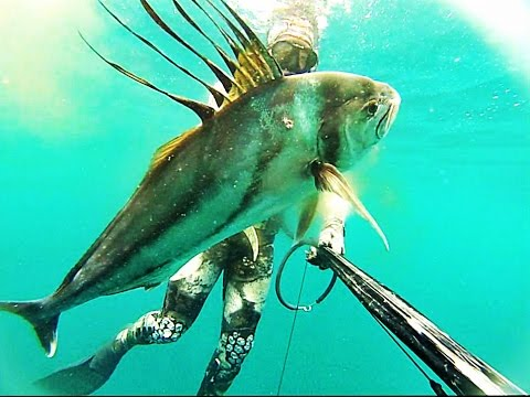 Rooster Fish,