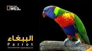الببغاء | نات جيو وايلد العربية | Nat Geo Wild Arabic