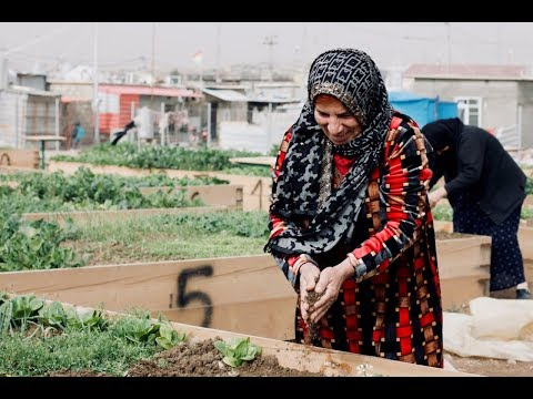 Living the Green Life: Syrian Refugees at Domiz Camp Embark on Livelihoods Project to Grow Food