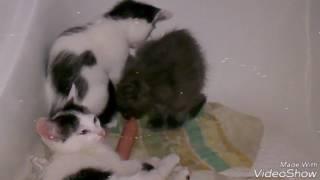 Котята едят в ванной