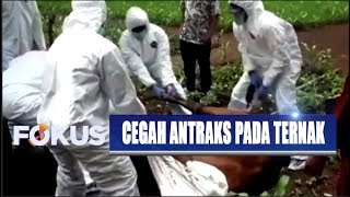 KLB Antraks Lebih Dari 20 Warga GunungKidul, Yogyakarta Terpapar Penyebaran Virusnya....