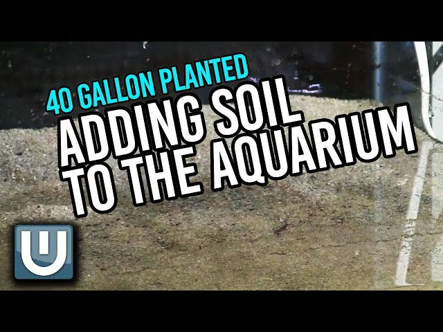 Adding Soil to the Aquarium   40g Soil Tank   Part 2