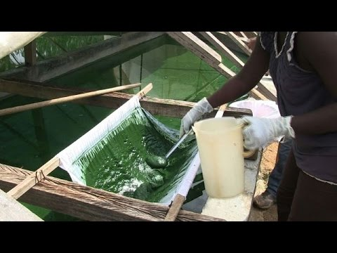 Sardines and spirulina to improve diets in Central Africa