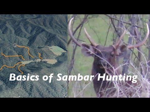 Basics Of Sambar Hunting
