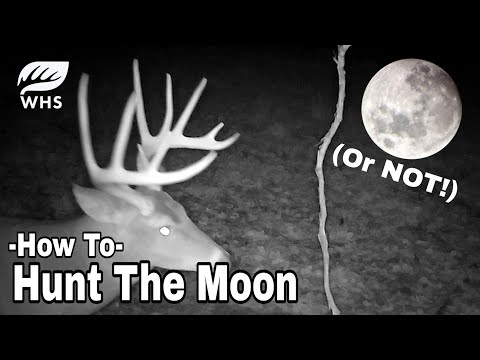 5 Ways To Deer Hunt A Full Moon
