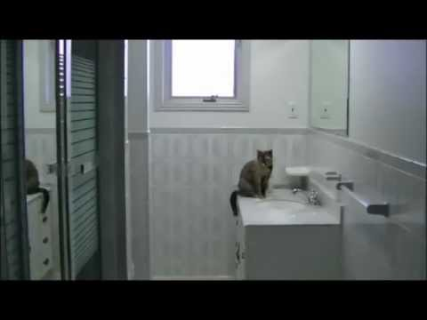 Image Result For Ny Bathtub Reglazers Review