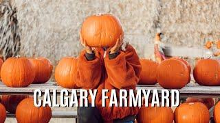 Pre-Halloween Calgary Farmyard