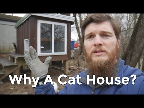 Why We Built a Cat House
