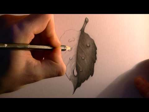 Drawing a Leaf with Waterdrops (HD)