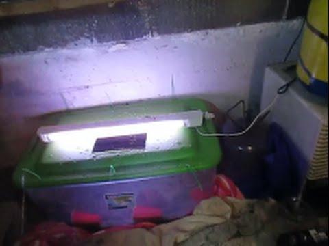 Making A Minniow Breeding Tank