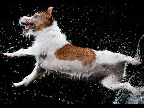 Cute Dogs Compilation | Best Funny Dog Videos for Kids