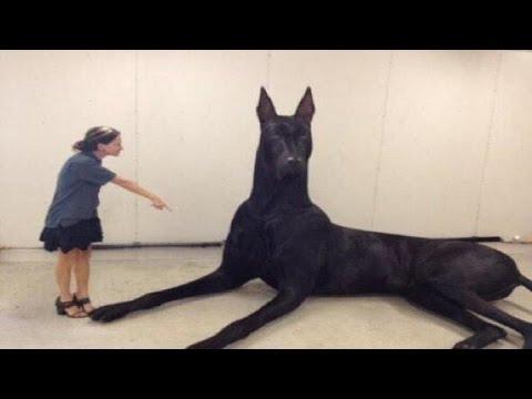5 Životinja Za Koje Nećete Verovati Da Postoje