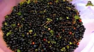 Семья Бровченко. Как быстро перебрать ягоду от листьев и мусора. Простое приспособление.