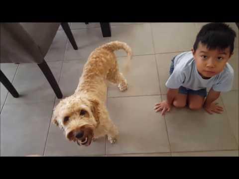 Dog Training Day 3 - Hand/Turn Around and Copy Command
