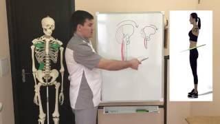 Почему нельзя растягивать мышцы (пока не посмотрели это видео). Перекос таза