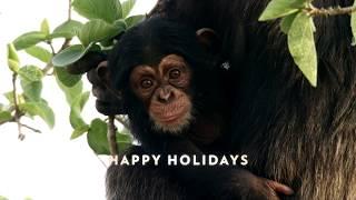 Happy Holidays   Dynasties Premieres January 19 at 9pm   BBC America