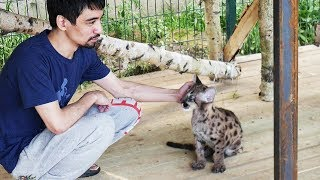 Пумка на прогулке :) А вы выгуливаете своих котиков?