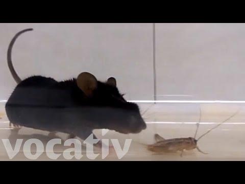 Scientists Programmed Lab Mice To Kill