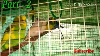 My new birds colony part - ll and releasing some birds into this colony (Hindi)