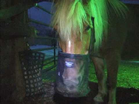 Horse With Feed Bag