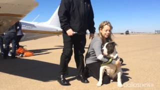 Joe The Dog Flies Home