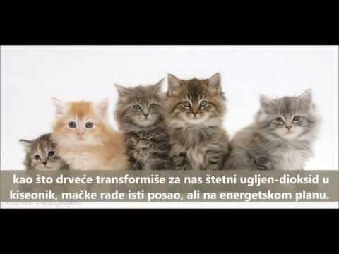 Mačka: magična životinja