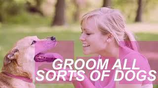 Dog Grooming School   Animal Behavior College
