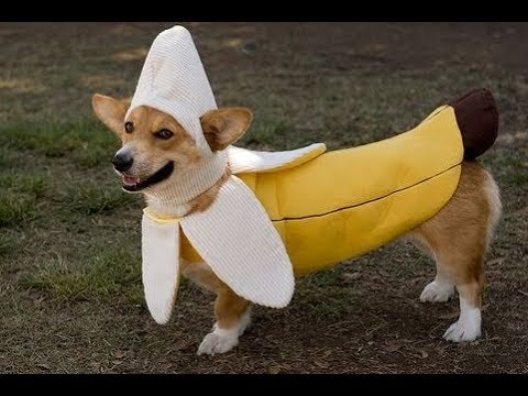 TRY NOT TO BURST OUT LAUGHING - FUNNY DOG compilation