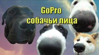 Посмотрите, как реагируют на камеру GoPro разные собаки.