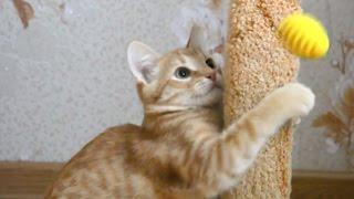 Как сделать котёнку лучшую игрушку. Развлечения для котят...