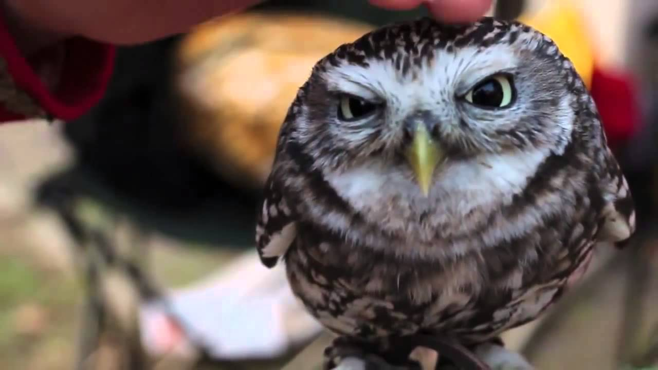 Super Cute Baby Owl Youtube