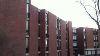 Turkey Flies into Window at Brandeis University