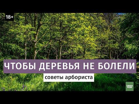 Вопрос: Какие деревья в Москве легче переносят зимний холод, мороз?