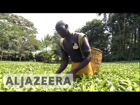 Kenyan tea farmers