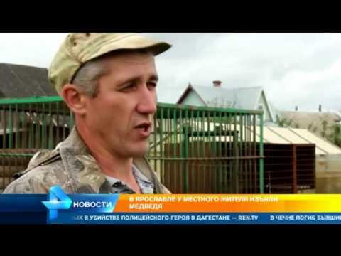В  Ярославле специальная комиссия решает судьбу ручного медведя