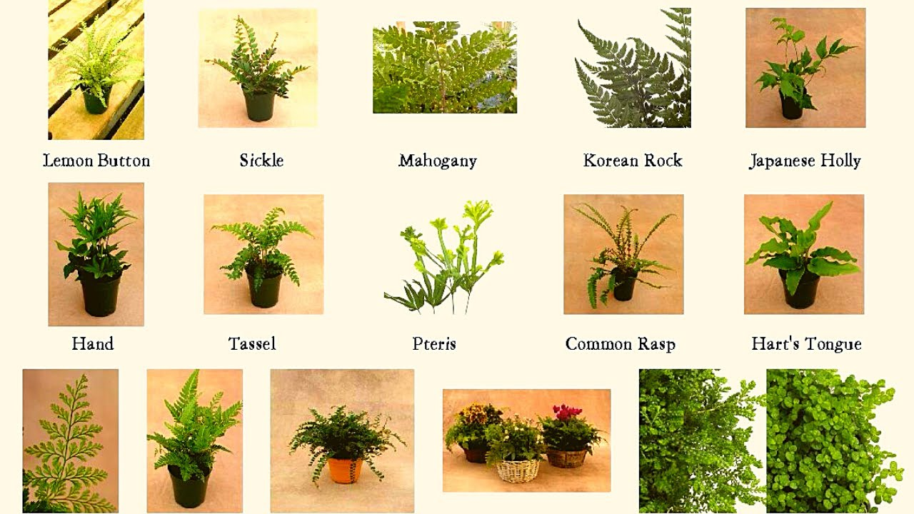 Download Fern Varieties A to Z