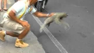 Ленивец ПЕРЕЛЕТАЕТ дорогу