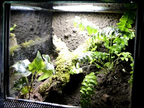 Tutorial How To Setup Tropical Terrarium Enclosure For