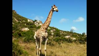 Rezerwat Boltierskop - Republika Południowej Afryki