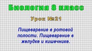 Биология 8 класс (Урок№21 - Пищеварение в ротовой полости. Пищеварение в желудке и кишечнике.)