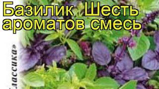 Базилик Шесть ароматов смесь. Краткий обзор, описание характеристик, где купить семена ocimum