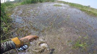 CAÇA AS TILAPIAS DEU BAGRE AFRICANO PESCA COM ESTILINGUE (SLINGSHOT FISHING)